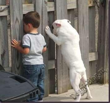 Смешные фото собак и детей, сентябрь - Doggi-Blog.ru - все о собаках и породах собак