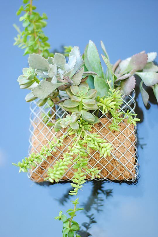 The Best Succulent Wall Planter Ideas On Pinterest Succulent - Cool diy wall planter