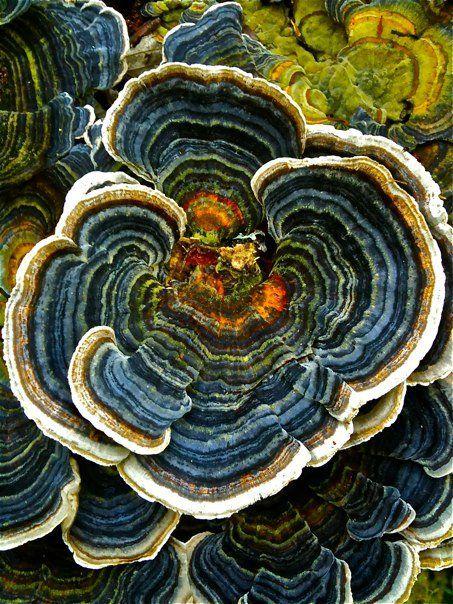 Fungi - color inspiration for Malabrigo yarns