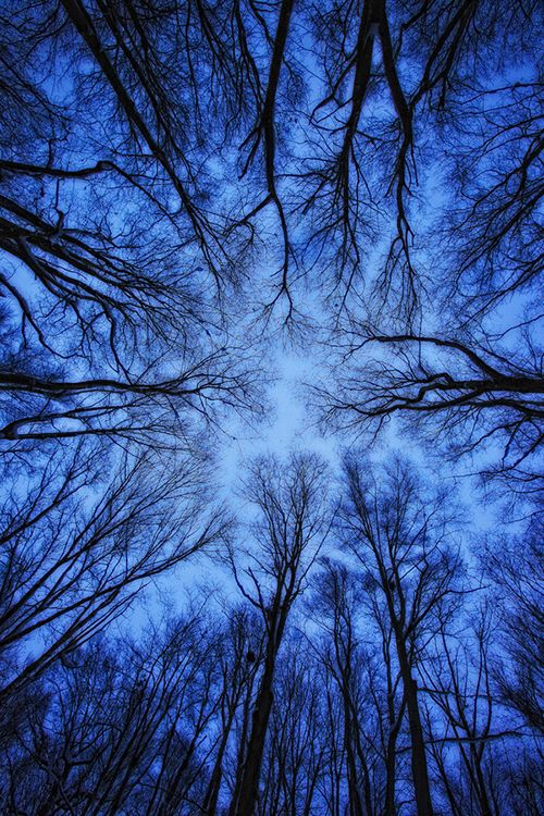 Perspective by Robert Postma, a beautiful view of treetops reminding us to look ip once in a while.