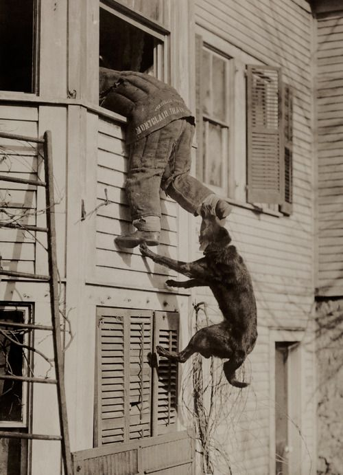 ratak-monodosico: A police dog bites the ankle of man during a training session, March 1919.  Photograph by the Public Ledger Service