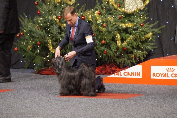 CH. wanted nice dog's Nomechan gyi-lin