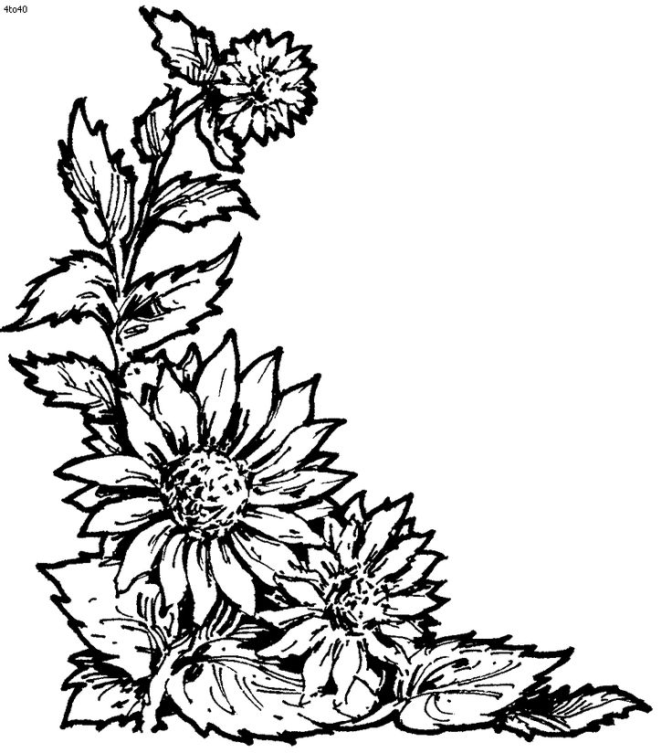 Flora Coloring Pages Sunflower Page Book Glass Painting