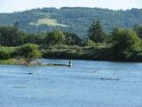 Cheadle Lake - my fav place to walk the dogs in Lebanon, Oregon