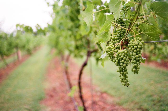 Oklahoma Wedding Venue - Winery Vineyard - www.SaraCphotography.com