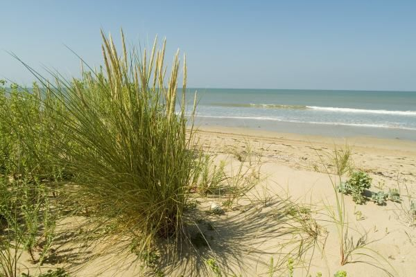Photo : La plage - Les dunes Saint Jean de Monts