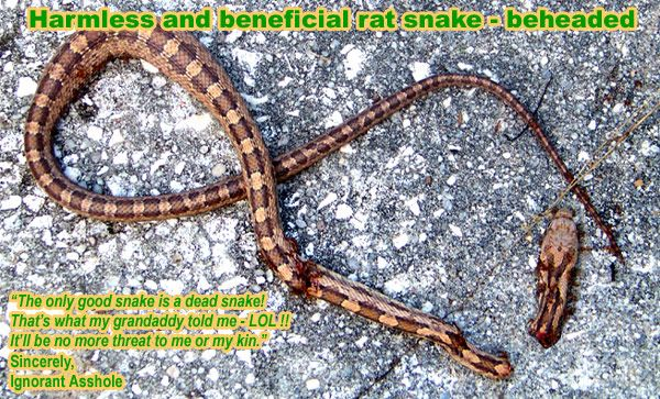 17 Best Images About Keep Snakes Away On Pinterest