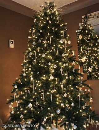 California Baby Redwood Christmas Tree. Http://www.balsamhill.com/