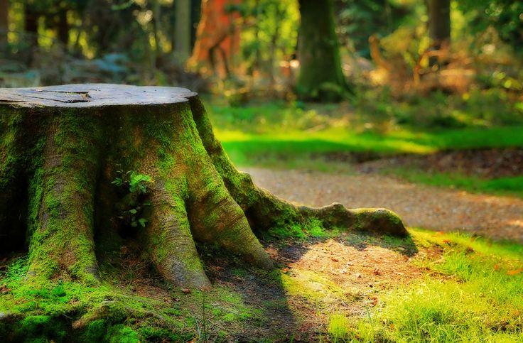 Magic Woods. Заколдованный лес. Национальный парк Новый Лес, графство Хэмпшир, Англия.