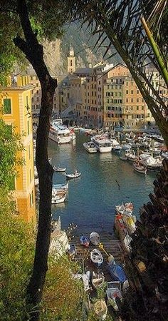 Camogli - Liguria, Italia...è un piccolo villaggio di pescatori e turistico resort italiano situato sul lato ovest della penisola di Portofino, il Golfo Paradiso nella Riviera di Levante, in provincia di Genova, sulla Riviera italiana.