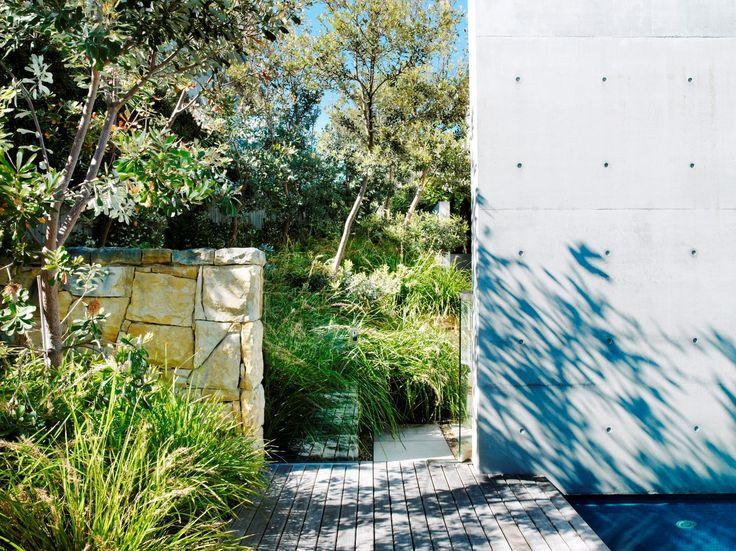 Banksia and lomandra
