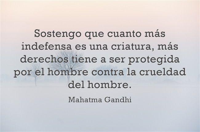 Sostengo que cuanto más indefensa es una criatura, más derechos...