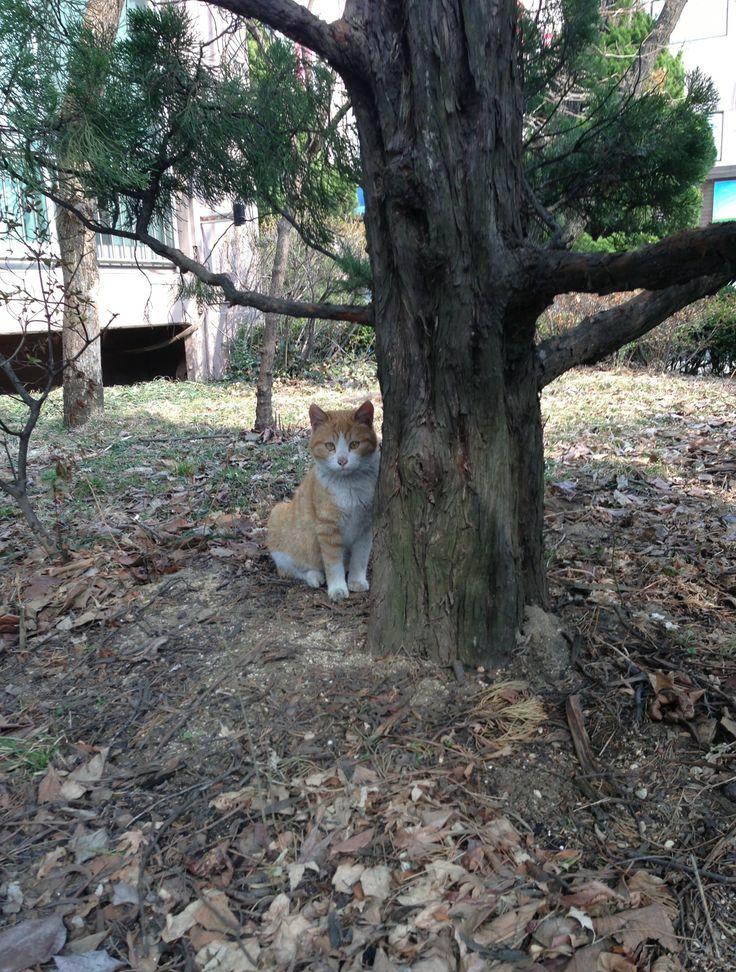 In my free time I hug tree #옴니