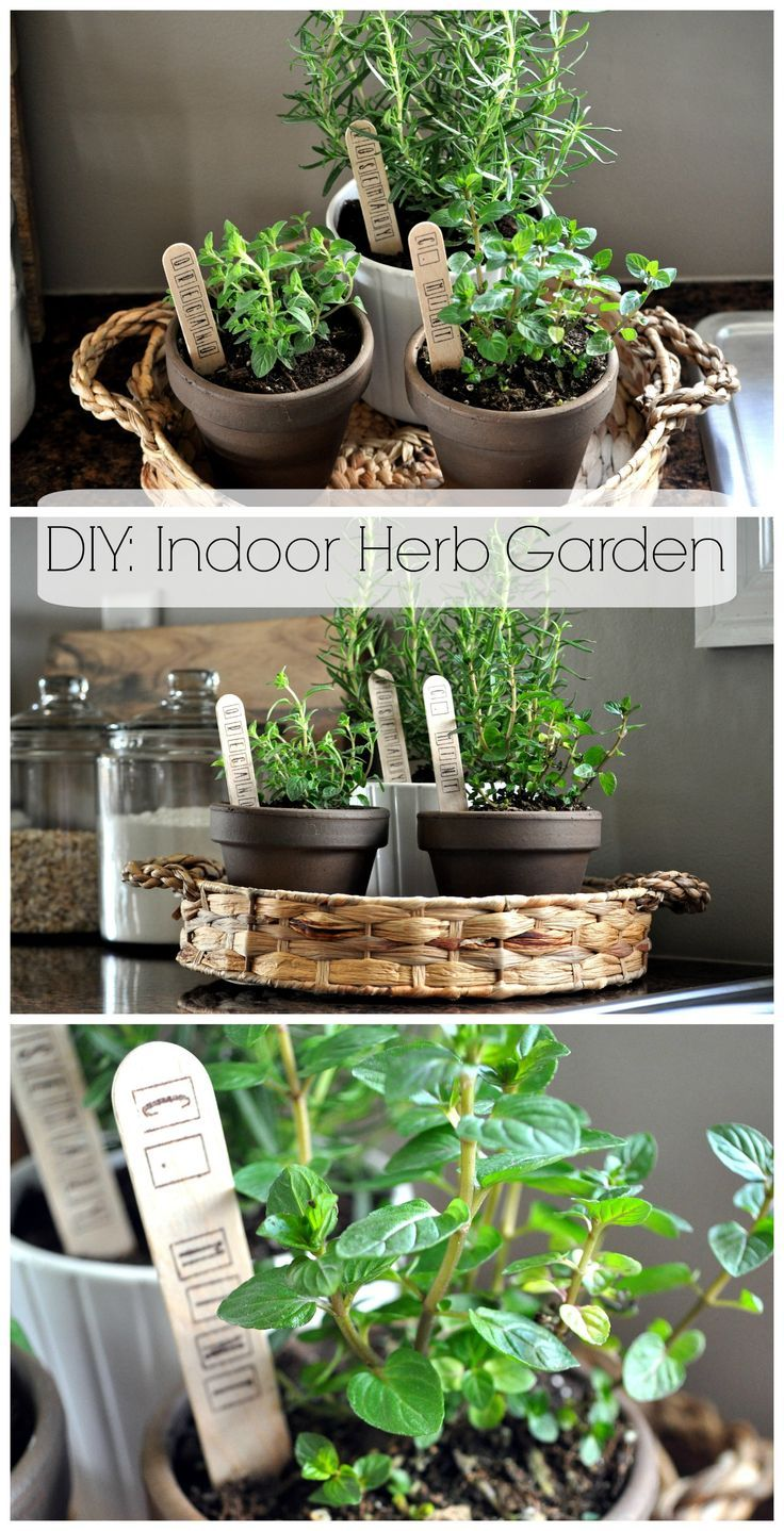 DIY: Indoor Herb Garden. So simple and cheap! www.littleglassjar.com #herbs #herbgarden #indoorherbgarden