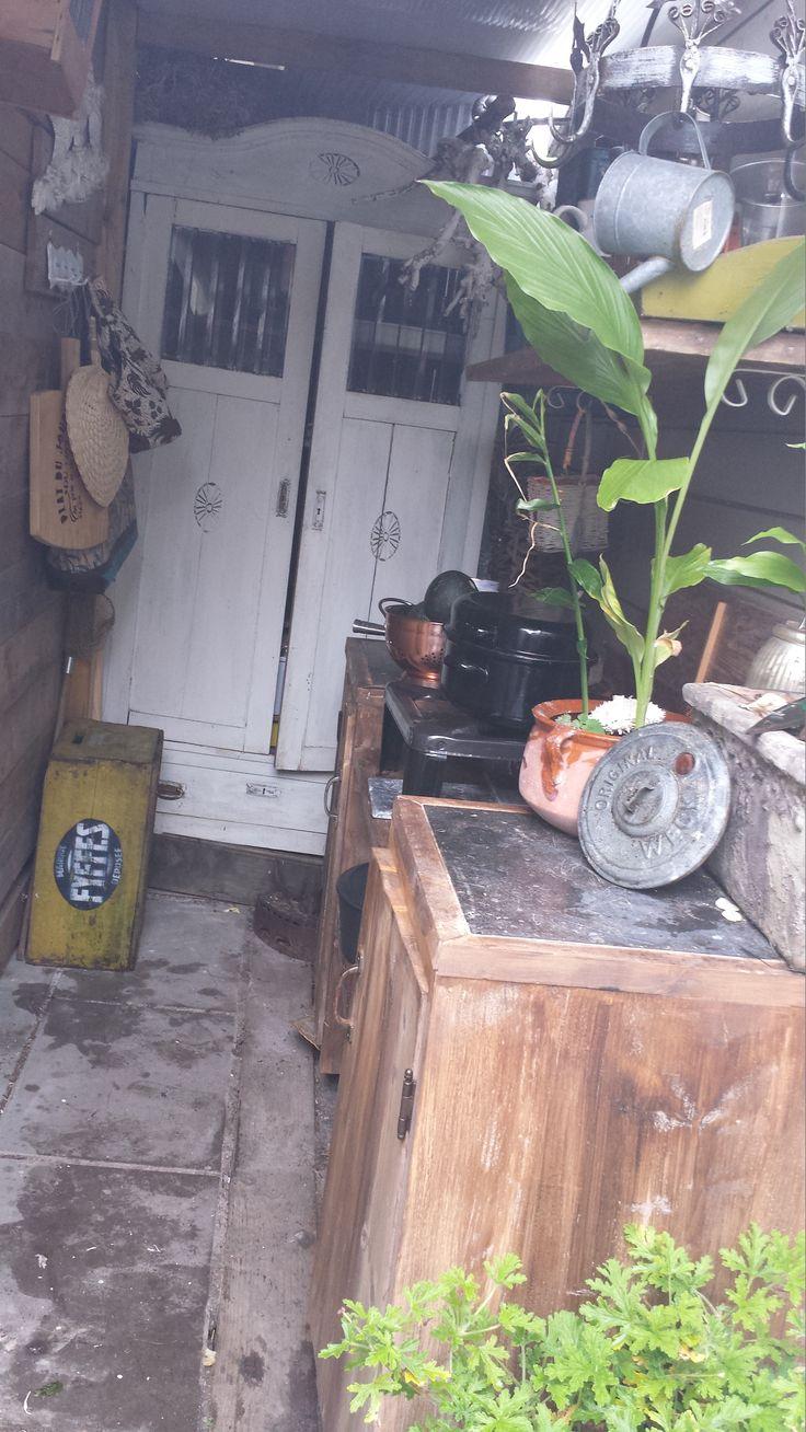 Gingerplant in outdoor kitchen Gemberplant in een pot voor de buitenkeuken
