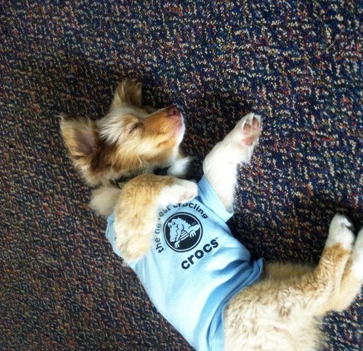 The newest little crocling takes a nap at #Crocs headquarters! Want more Crocs fun? head to www.facebook.com/crocs!