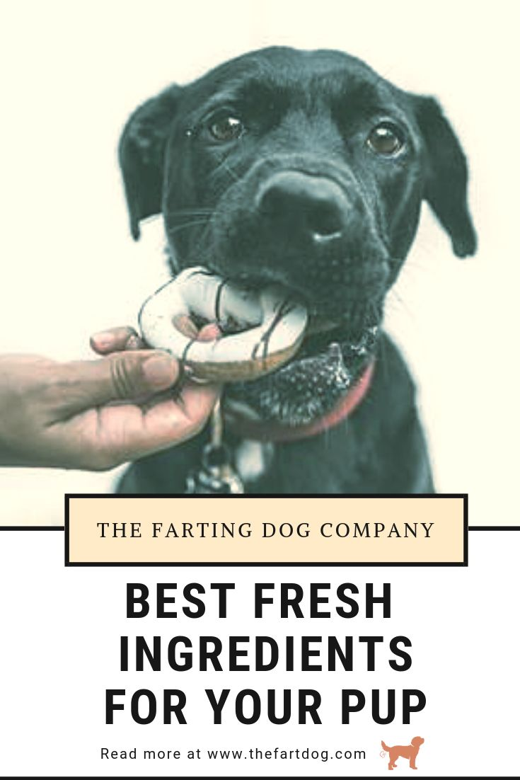 Best Dog Food Ingredients For Your Dog S Good Health Best Dog