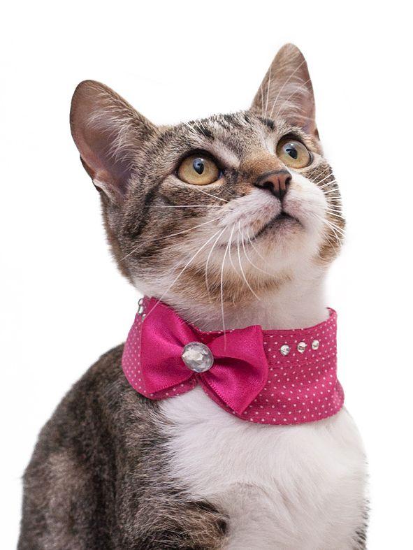 Golas para cães e gatos mais em: www.cacaudresspet.com