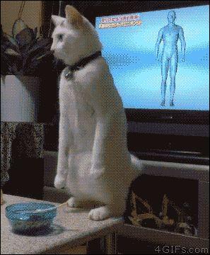 O gato invertido