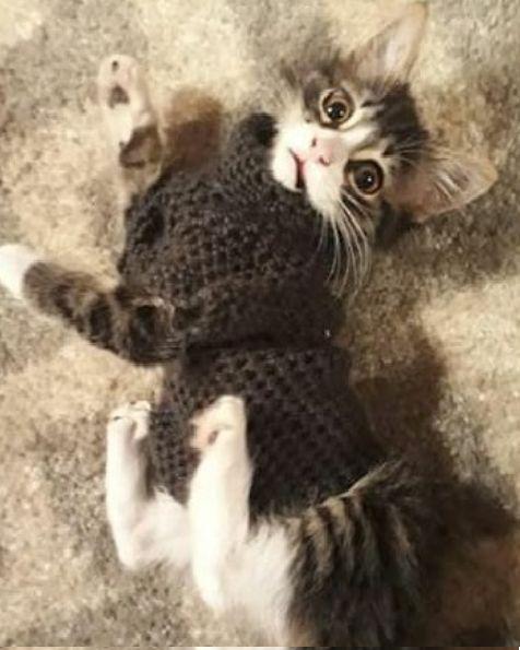 Sweater gatito a crochet