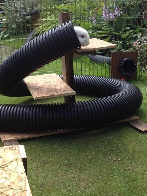 Corrugated plastic pipe play area for rabbits. Isn't it cool?
