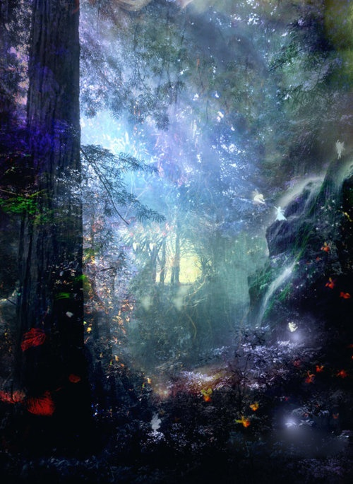 Magic forest belive in fairy tales pinterest for Fairy forest mural