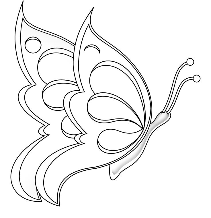 Contour Line Drawing Butterfly : Best butterfly images on pinterest butterflies