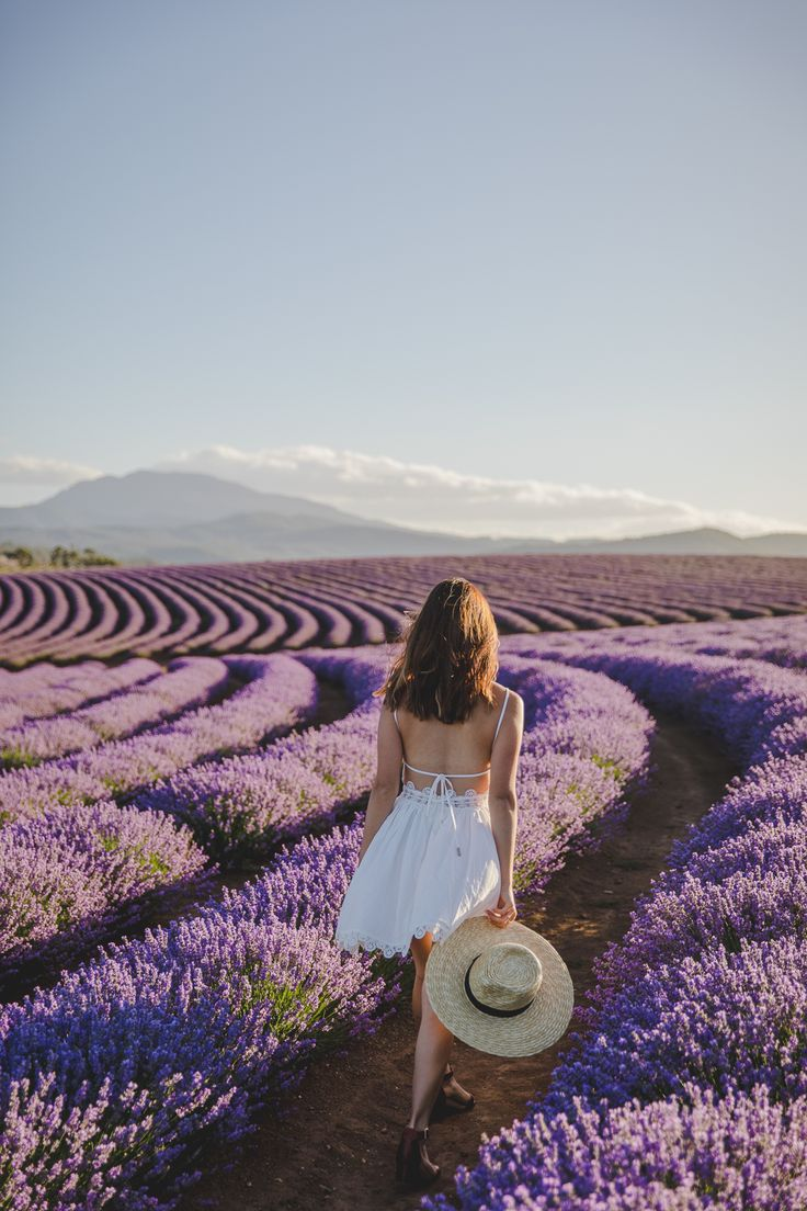 Tasmania Bridestowe Estate Lavender Farm Travel Blog 6