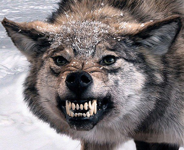 Душа - Волка