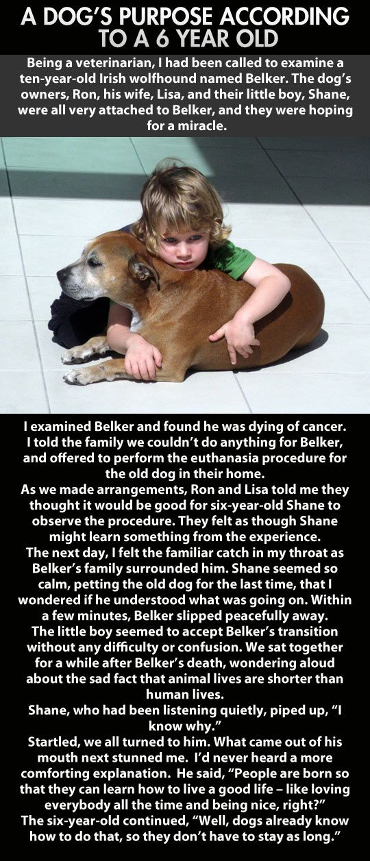 The family dog died of cancer. How the 6 year old responded blew me away!