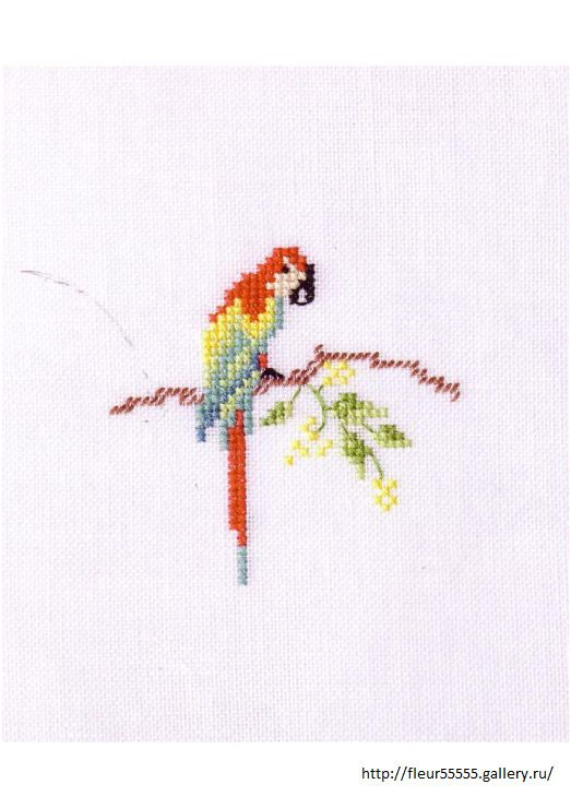 parrot cross stitch