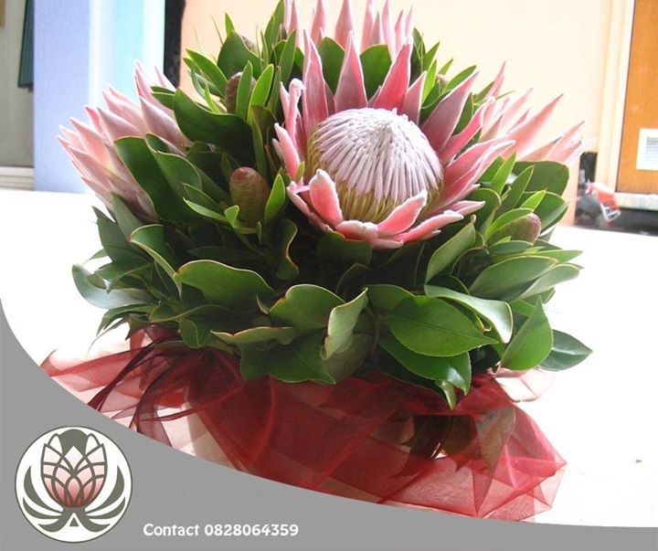 The benefit of gifting someone with proteas is that they have a long vase life, they can even be dryed out afterward and work beautifully as decor on your patio or in the home. #flowers #decor #bofbergflowers