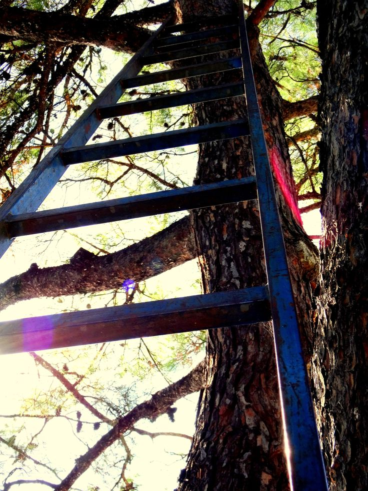 #stairs #tree #nature #greek #greece #sun