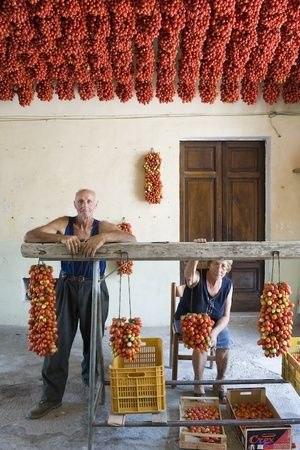 The husband and his wife prepare pomodorino piennolo del Vesuvio for the winter season in their home