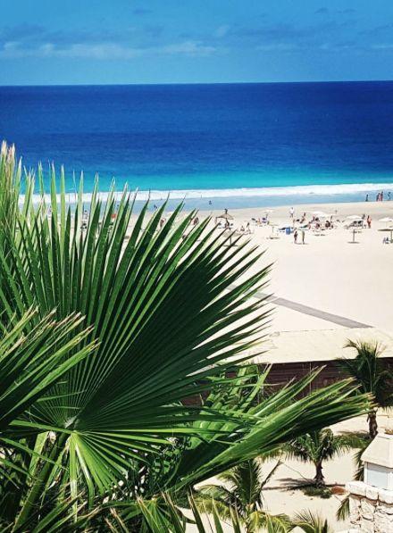 Palm on Boa Vista beach, amazing blue sea, Cape Verde #Kaapverdie