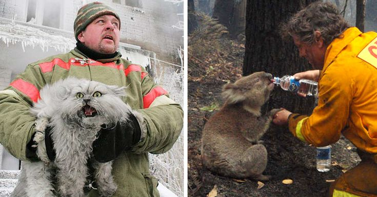 15+ Firefighters Who Risked Their Lives To Save Animals | Bored Panda
