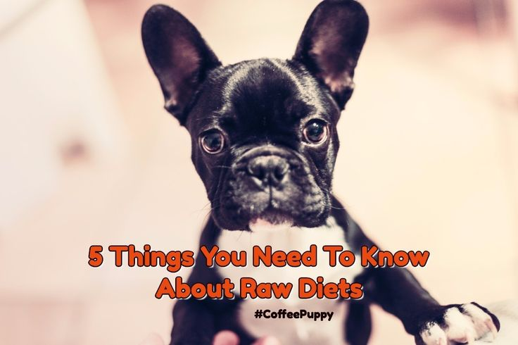 5 Things You Need To Know About Raw Diets     #CoffeePuppy #CookingForDogs