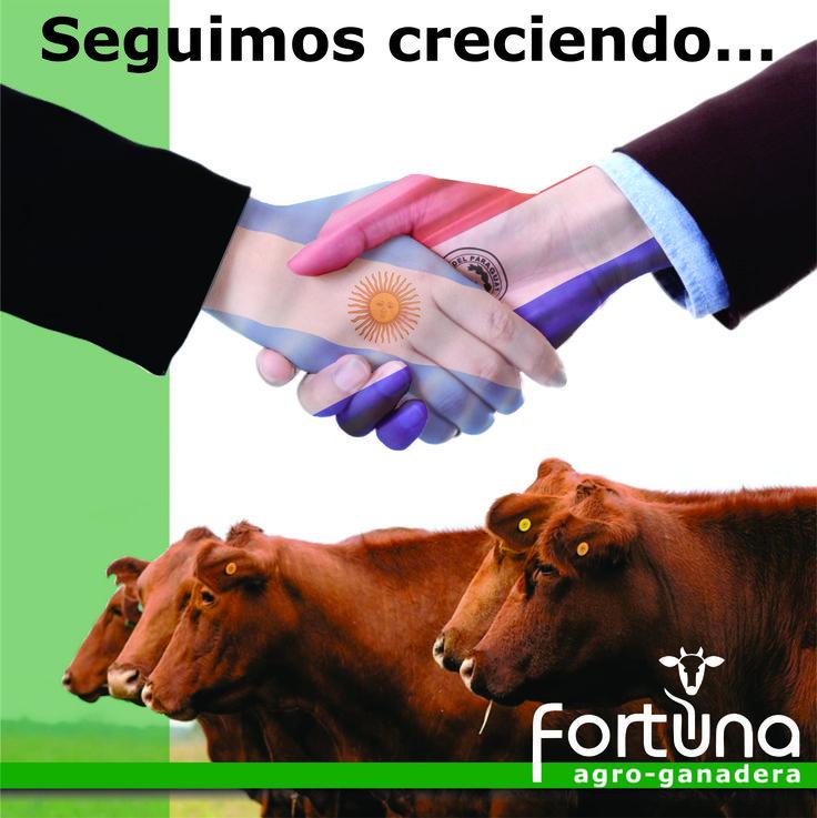 Holding Fortuna sigue creciendo! Con nuestro nuevo departamento de Fortuna Agro-ganadera ingresamos en el mercado de Paraguay, con la cría, engorde y comercialización de ganado.  #FortunaAgroGanadera #HoldingFortuna #FortunaHolding
