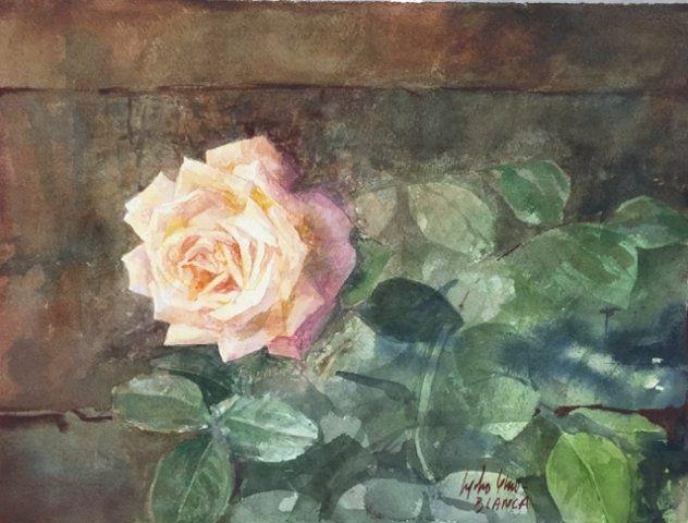 Pedro Cano - Rosa en Galería la Aurora