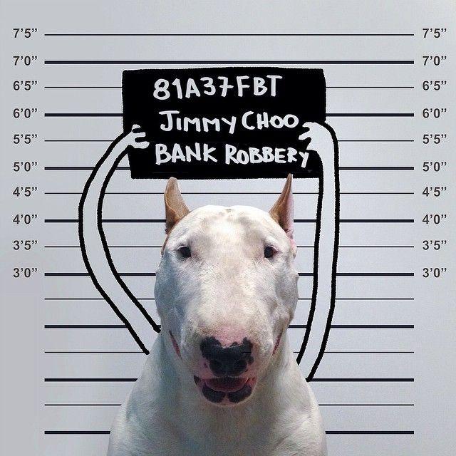 Brasileiro cria ilustrações para interagir com seu cão Bull Terrier   Estilo