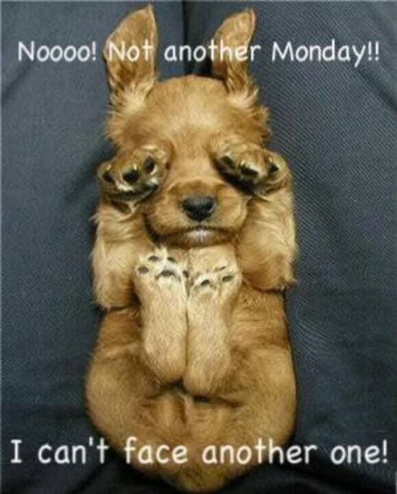 Nice Not Another Monday Quotes Quote Monday Days Of The Week Monday Quotes Happy Monday  Monday Humor