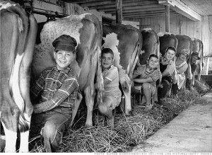 kids milking cows