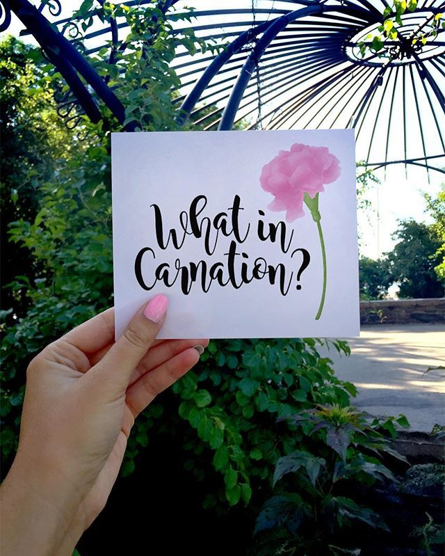 What in carnation?  This feels like July weather, not September! ... No complaints though!  . Get it on some gear at www.society6.com/avenger |  Printable Poster available at alittleleafy.etsy.com  . . . . . #alittleleafy #etsy #etsyseller #etsysellersofinstagram #etsyshop #etsyelite #etsytown #etsysellers #whatincarnation #carnation #carnations #flower #flowers #nature #garden #floral #leaves #leaf #plants #pun #puns #horticulture #plantlife #plantlady #plantlover #pinkflowers #pin...