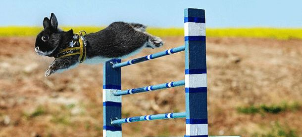 Top 20 Most Mysterious Sports From Around The World ... Kaninhop (Bunny Jumping) with trained bunnies jumping over obstacles └▶ └▶ http://www.pouted.com/?p=19840