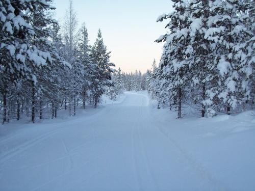 Parque Nacional Pyhä-Luosto - com neve