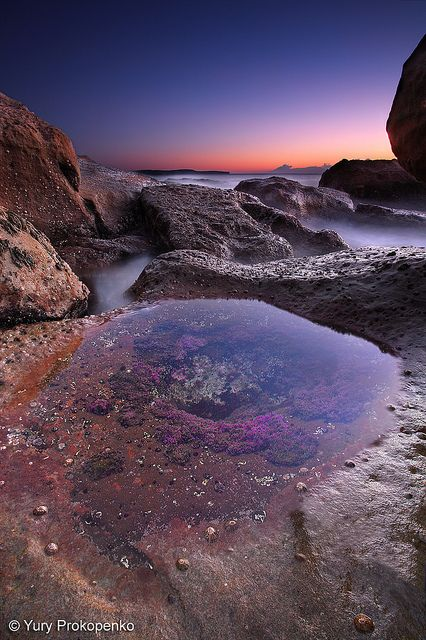 """Alien Landscape?  Whale Beach, Sydney's Northern Beaches, Australia    f/22 