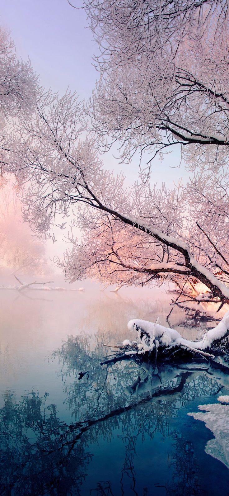 Naturbilder: schöne #Naturbilder #Natur #Baum #Gewässer #Winter