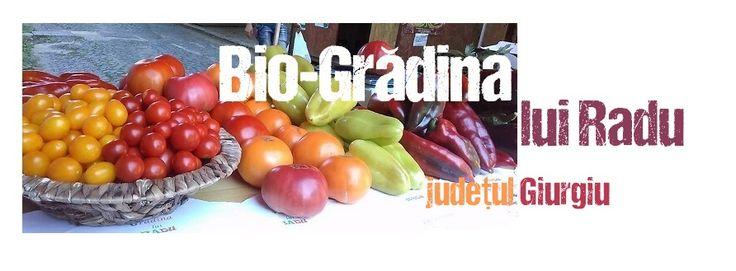 Bio-grădina lui Radu, județul Giurgiu, România  http://platferma.ro/bio-gradina-lui-radu/