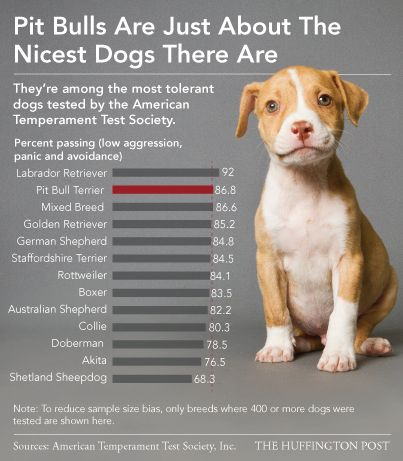 #Pitbulls are just about the nicest #dogs there are. MYTH BUSTED!