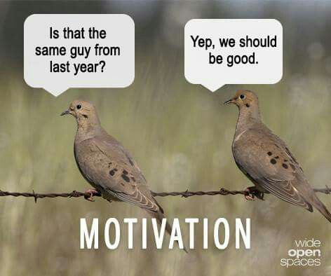 605003c0be7822678063b3f5d278befe dove season twisted humor 9 best dove hunting images on pinterest dove season, dove